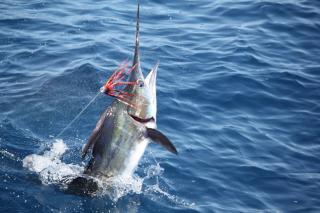 Puerto Rico Sportfishing Charters