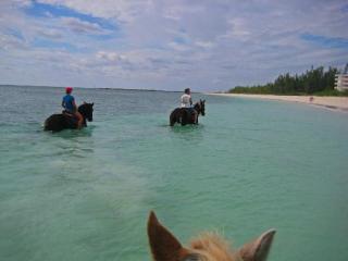 Trikk Pony Adventures