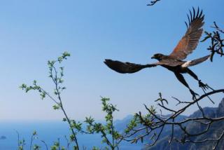 Le Ali Nel Vento- Birds Of Prey Show