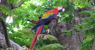 Diego Birding And Nature Day Tours