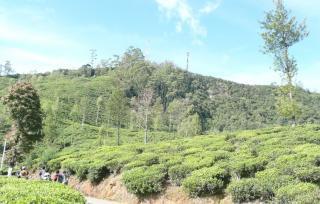 Single Tree Hill