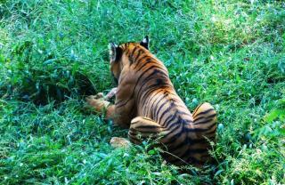 Assam State Zoo Cum Botanical Garden