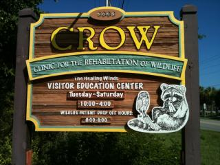 Clinic For The Rehabilitation Of Wildlife Crow