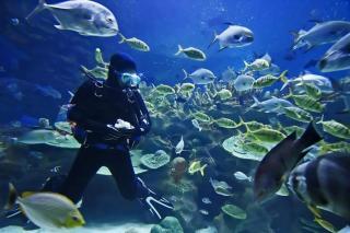 panama city diving