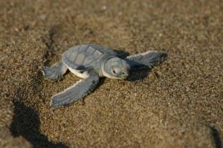 lara bay turtle conservation station