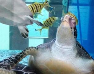 Omani Aquarium And Marine Science And Fisheries Centre