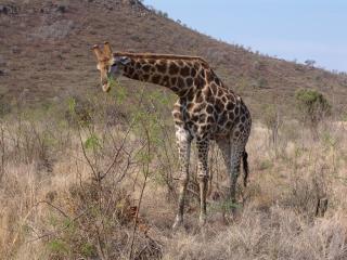 Pilanesberg National Park And Game Reserve