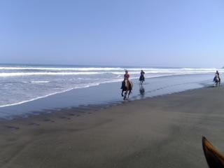 Wild Coast Ruapuke
