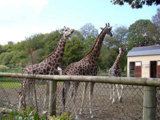 parc zoologique et chateau de la bourbansais