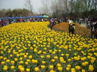Nanjing Lovers Garden