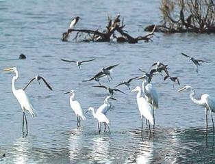 Sanya River Birds Nature Reserve