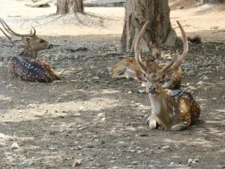 Safari Park Open Zoo