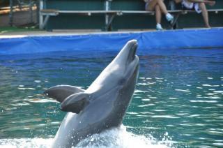 Marmaris Dolphinarium-aquapark
