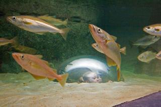 tregastel marine aquarium