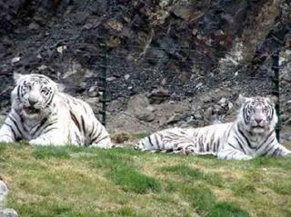 tianshan wildlife reservation