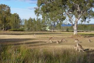 Coombabah Lakelands Conservation Area- Eastern Section