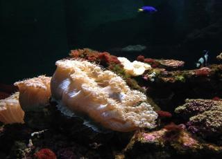 Marine Aquarium And Museum