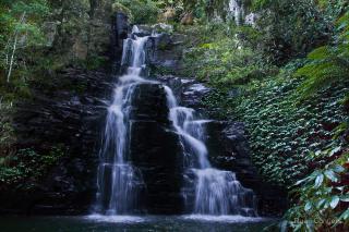 Macquarie Rivulet