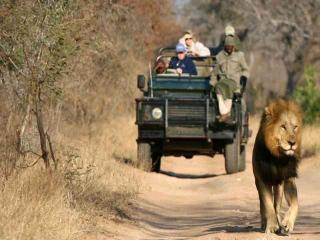 pilanesberg safaris