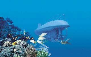 Maui Undersea Adventures