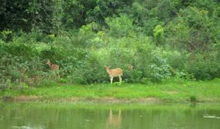 Van Vihar National Park