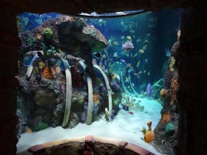 Sea Life Kansas City Aquarium Kansas City Ticket Price