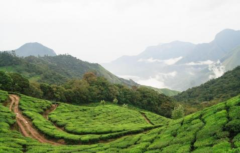 Things to do in Munnar