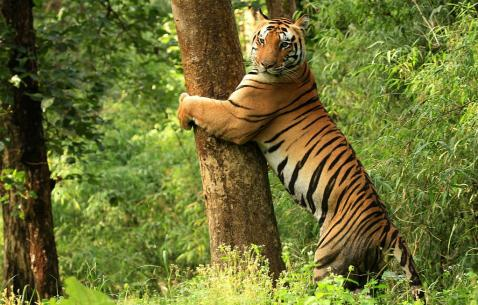 How to get in and get around Kanha