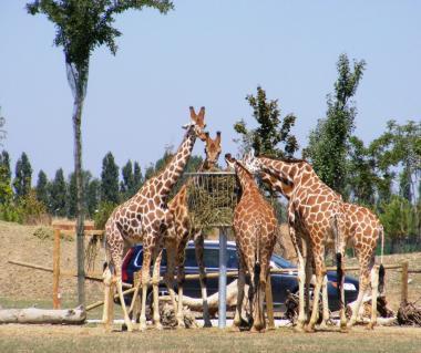 Safari Ravenna Tours