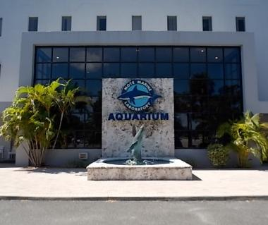 Mote Marine Laboratory And Aquarium Tours