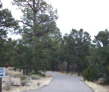 Cibola National Forest Tours