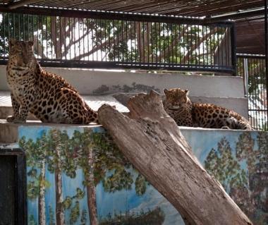 Limassol Zoo Tours