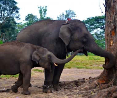 Dubare Elephant Camp Tours