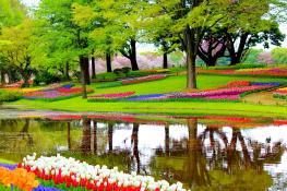Lisse, South Holland, Netherlands
