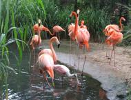 Zoo Of The City Of Barranquilla