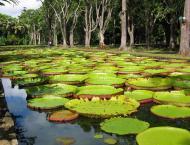 Pamplemousses Botanical Garden