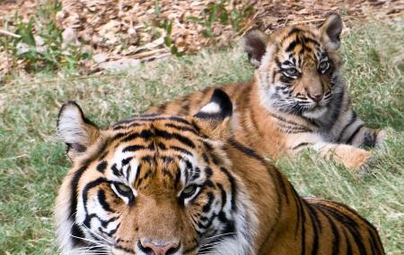 Zoo Atlanta Image