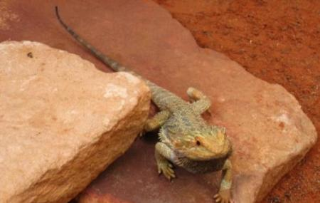 Alice Springs Reptile Centre, Alice Springs