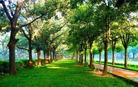 Cubbon Park Image