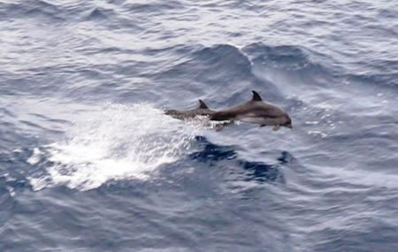 Dolphins Point Image