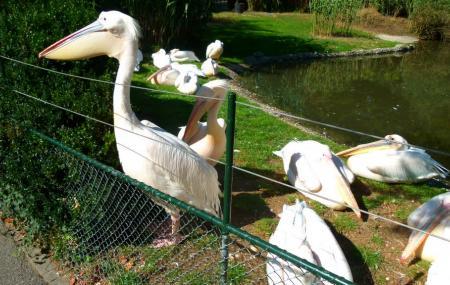 Basel Zoo, Basel