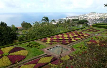 Botanical Garden Madeira Image