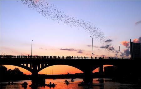 Austin Bats Image