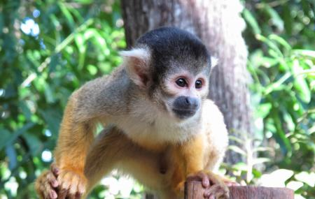 Bush Babies Monkey Sanctuary, Hartbeespoort