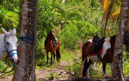 Discovery Horse Tours Image