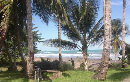Caribbean Coconut, Cahuita