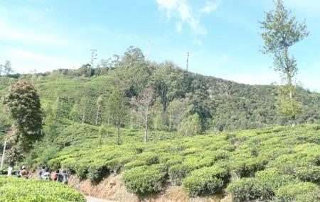 Single Tree Hill, Nuwara Eliya