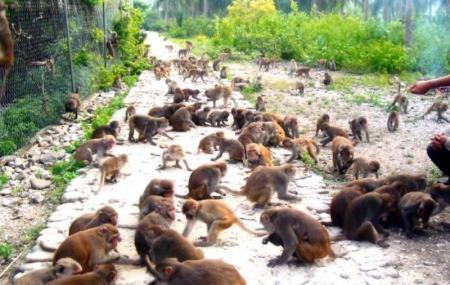 3 Monkeys Day Tours, Liberia