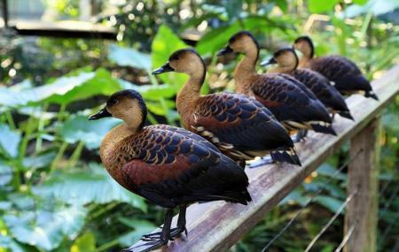 Wildlife Habitat Port Douglas Image