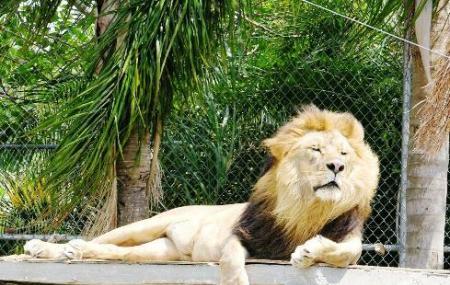 Big Cat Habitat And Gulf Coast Sanctuary, Sarasota